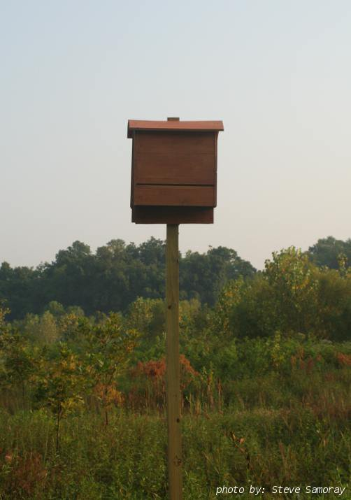 The tennessee bat working group for Bat condo