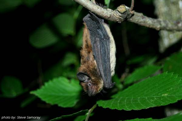 The Tennessee Bat Working Group